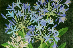 click here to view larger image of Giant Agapanthus / Lilies -Of- The Nile (hand painted canvases)