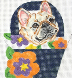 French Bull Dog - click here for more details