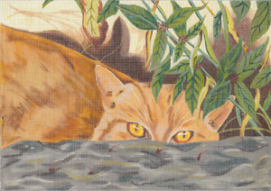Stoney - Orange Tabby - click here for more details