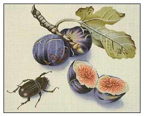 click here to view larger image of Figs and Beetle (hand painted canvases)