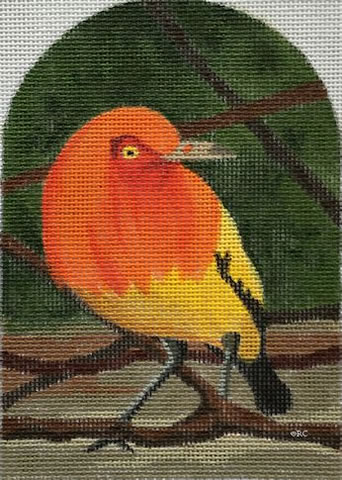 Flame Bowerbird - click here for more details