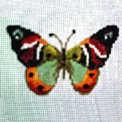 click here to view larger image of Butterfly 302 (hand painted canvases)